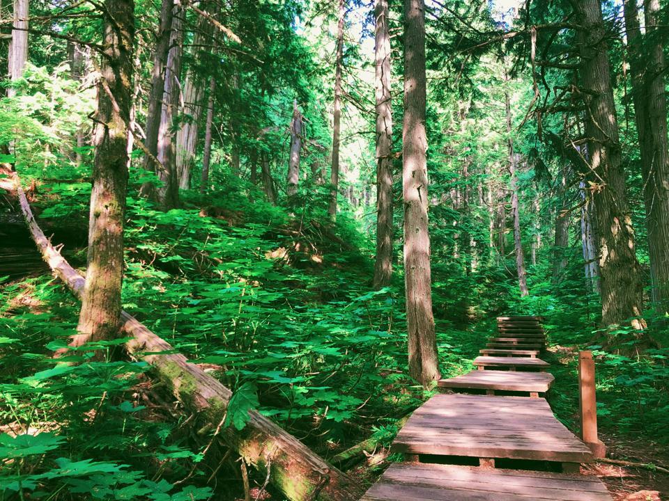 Is Giant Cedars Boardwalk in Mount Revelstoke National Park the best place int he world for forest bathing?
