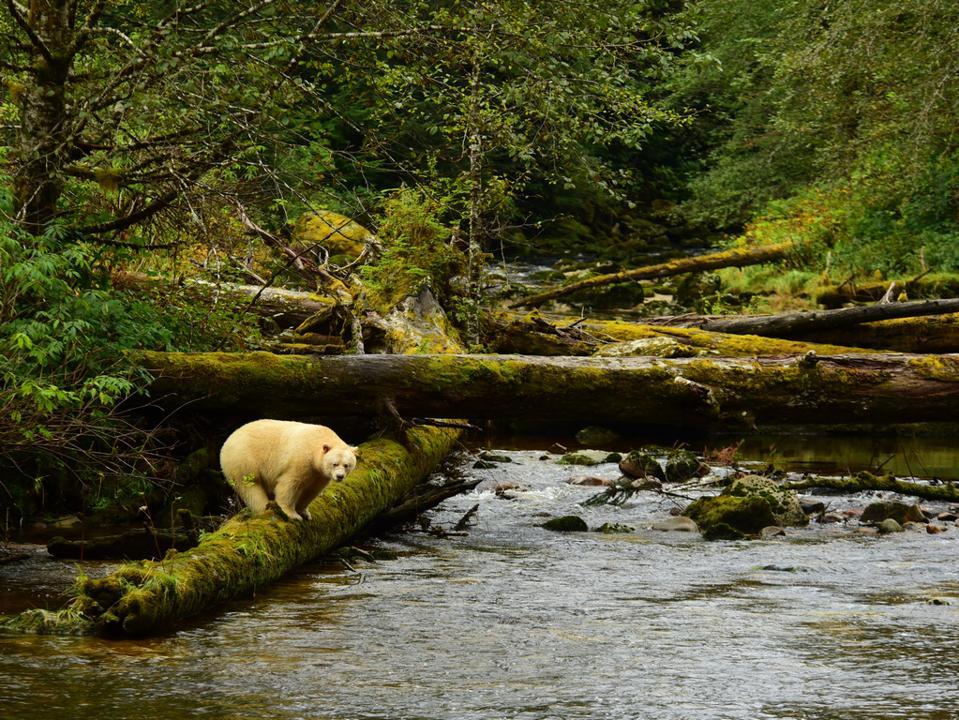 white bear ghost bear
