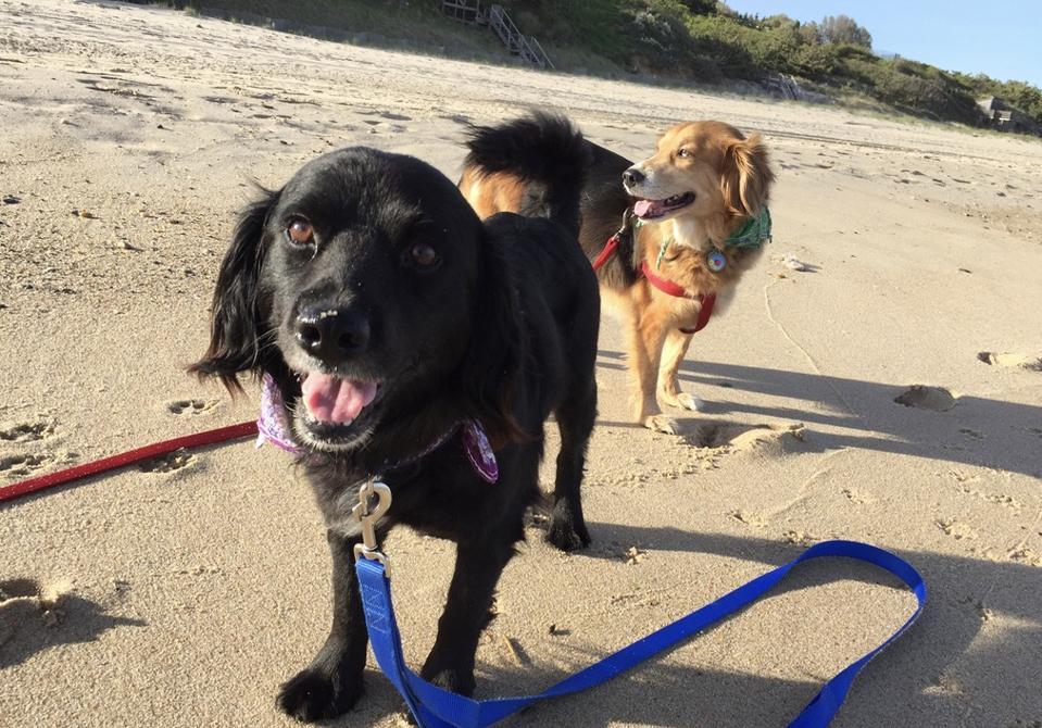 Dogs enjoying beach near Montauk, Long Island