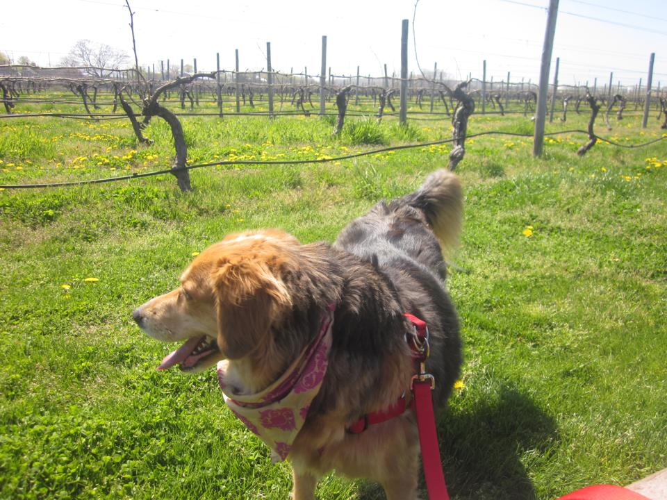 Winery Hopping in North Fork