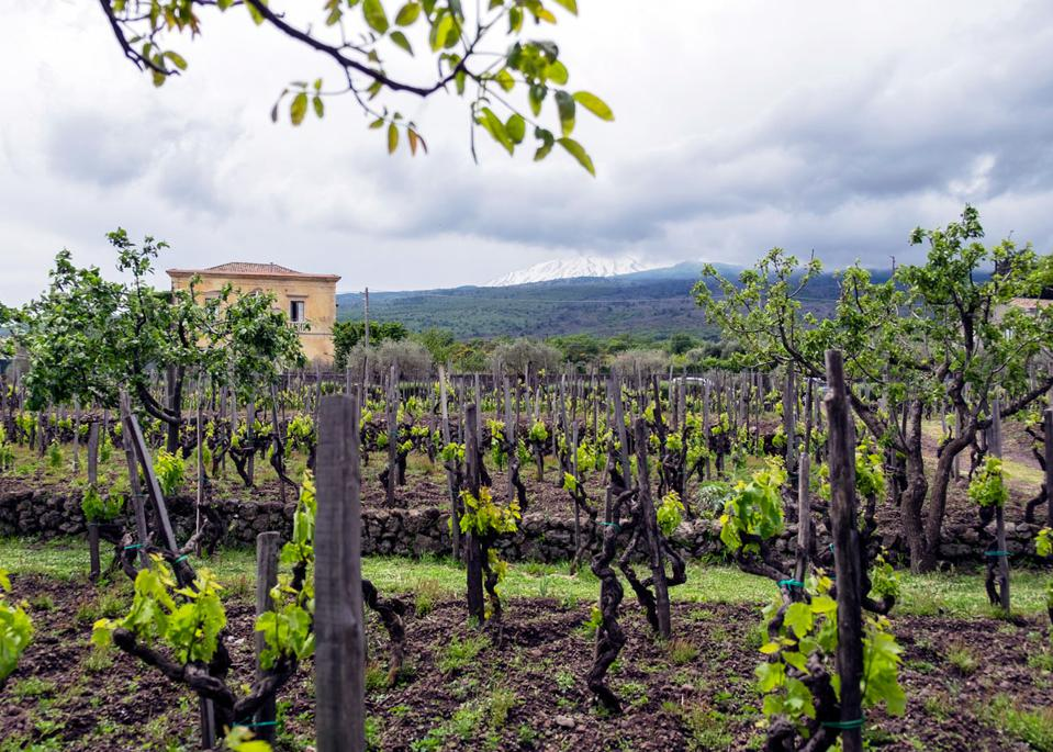 Wineries on Etna
