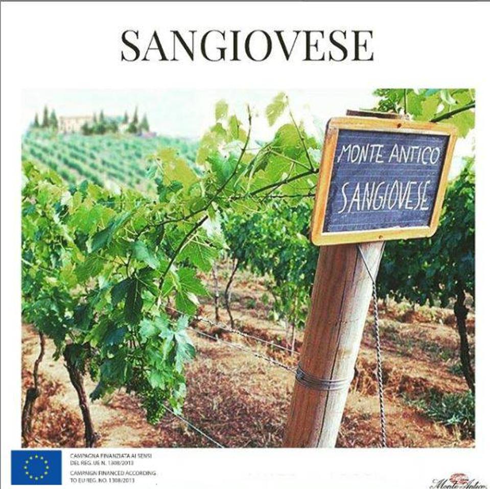Monte Antico Sangiovese Vineyard