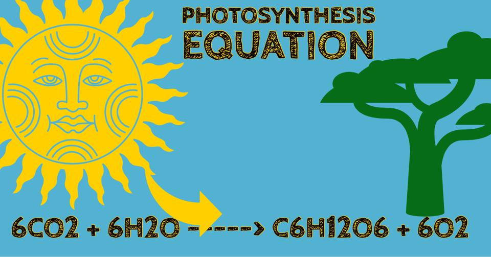 The balanced photosynthesis equation