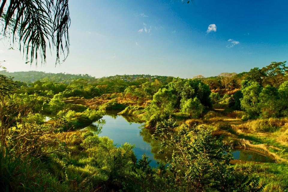 Jungle scenes near San Ignacio, Belize