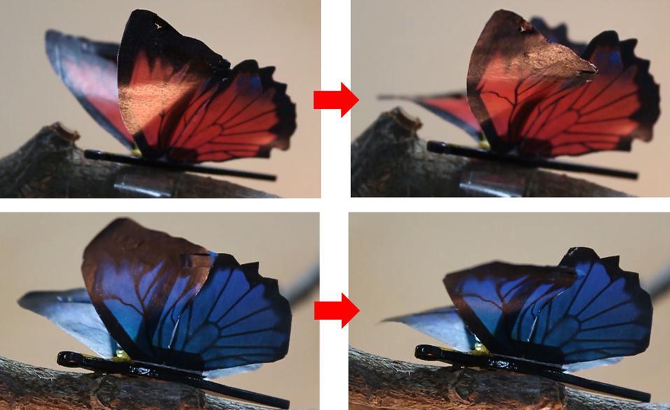 Robot Butterflies Show What New Artificial Muscles Can Do
