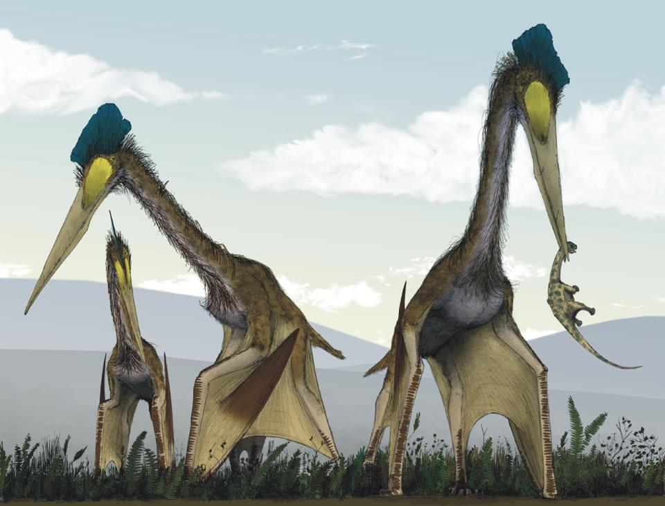 Artist's depiction of large flying dinosaurs stalking small vertebrates and other food.