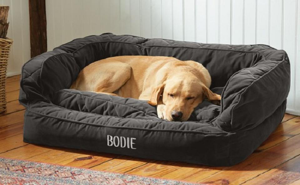 The Best Dog Beds For Home Travel And More