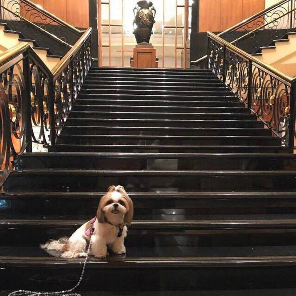 dog posing on grand staircase at Four Seasons Hotel Singapore