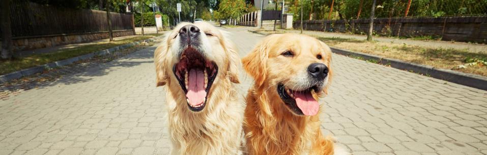 happy dogs in Seattle