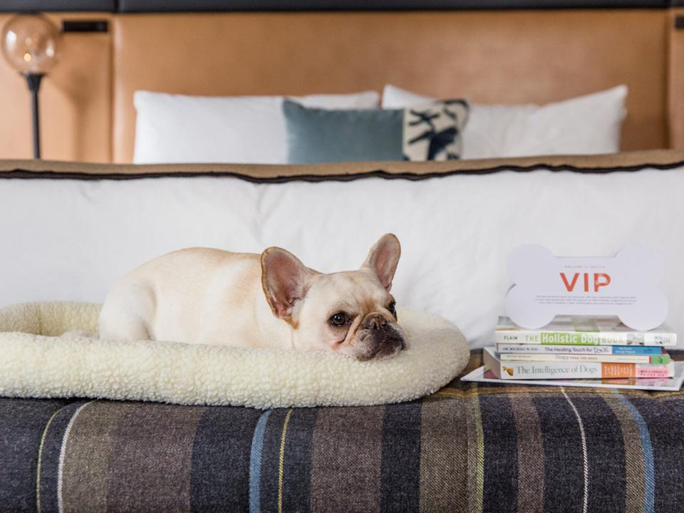 dog on bed with books