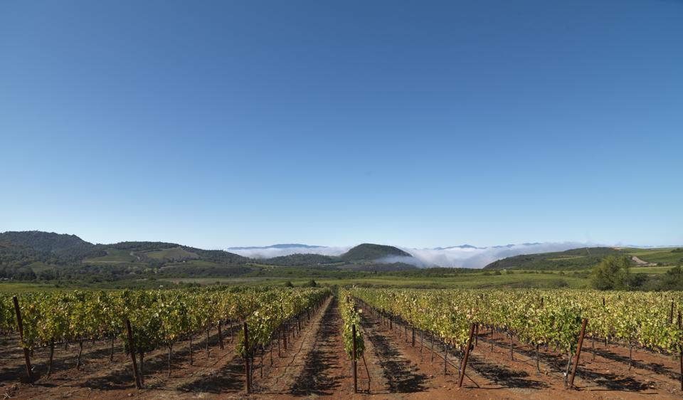 Acumen - A New Shining Star From Napa Valley