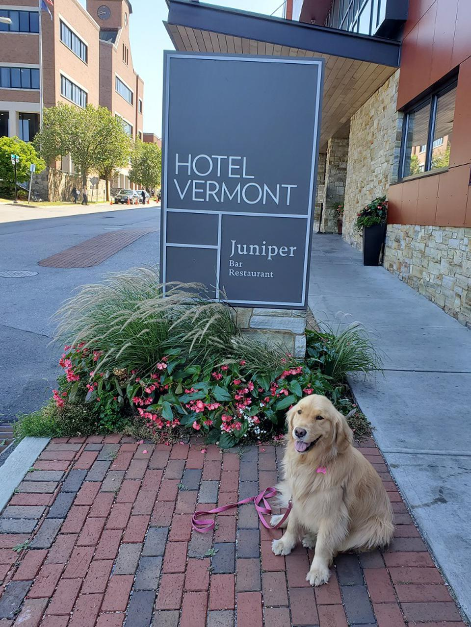 Dog at Hotel Vermont