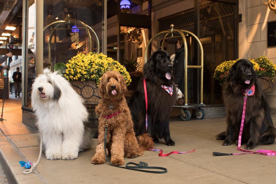 Best pet friendly hotels Chicago