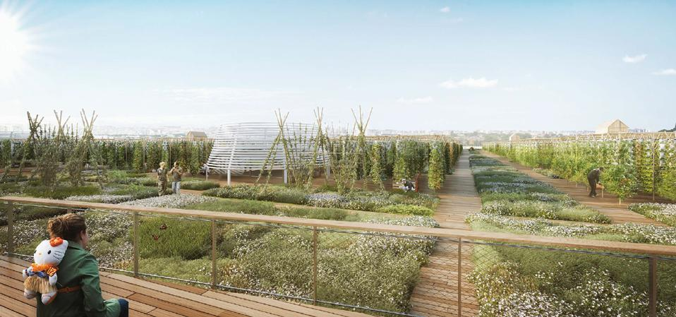 Architects view of the largest urban farm and green roof in Paris