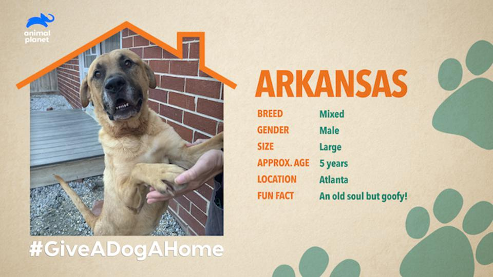 Animal Planet's new twice-weekly live pet adoption show'Give a Dog a Home Live!' will feature more than 15 animals available for adoption per show.