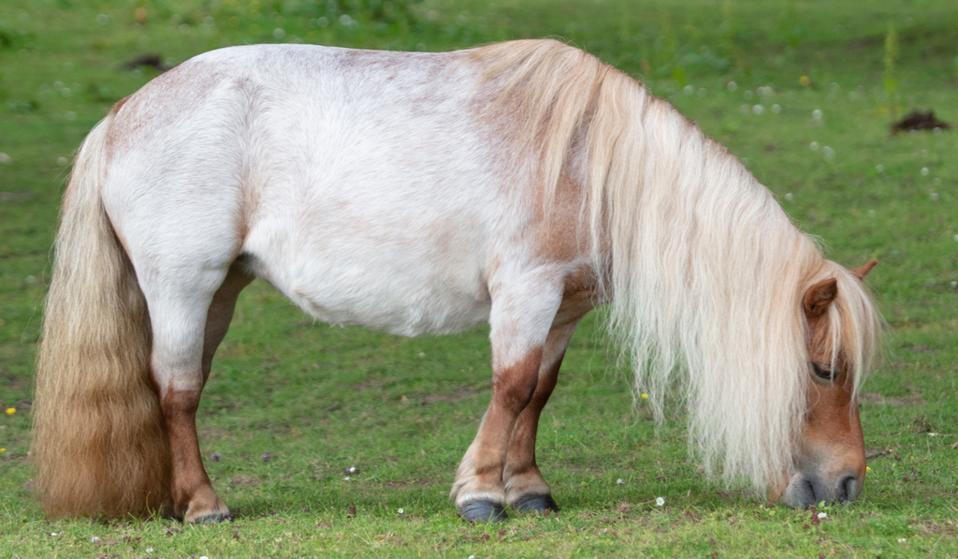 pony at hotel