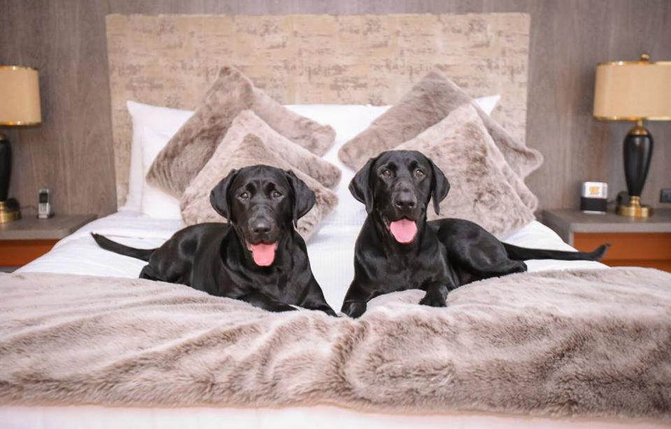 dogs on hotel bed