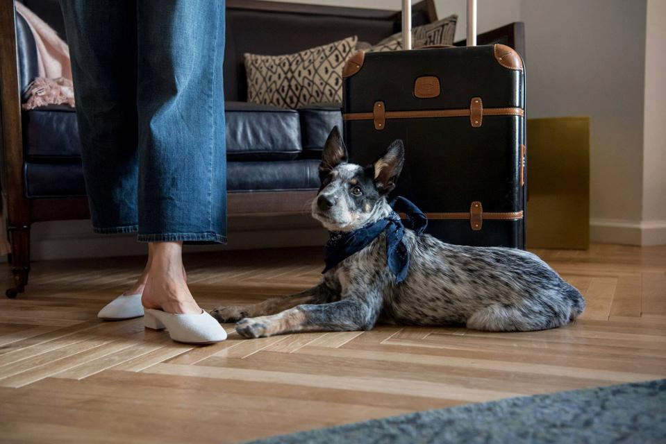 dog and suitcase in hotel