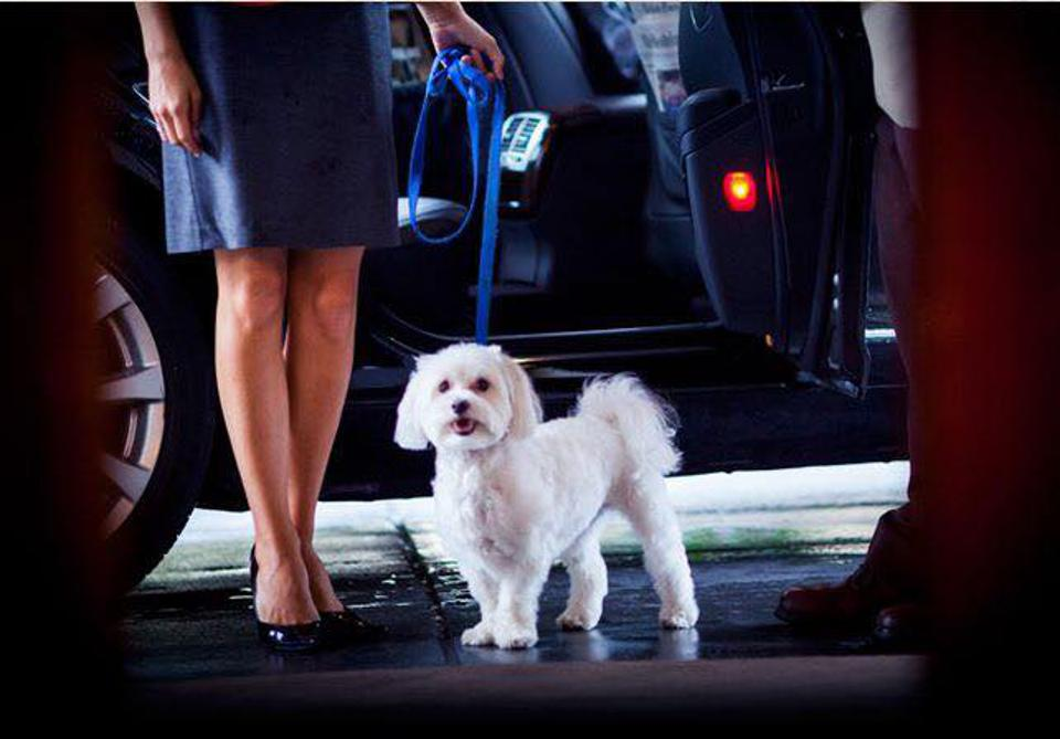 dog in front of car at valet