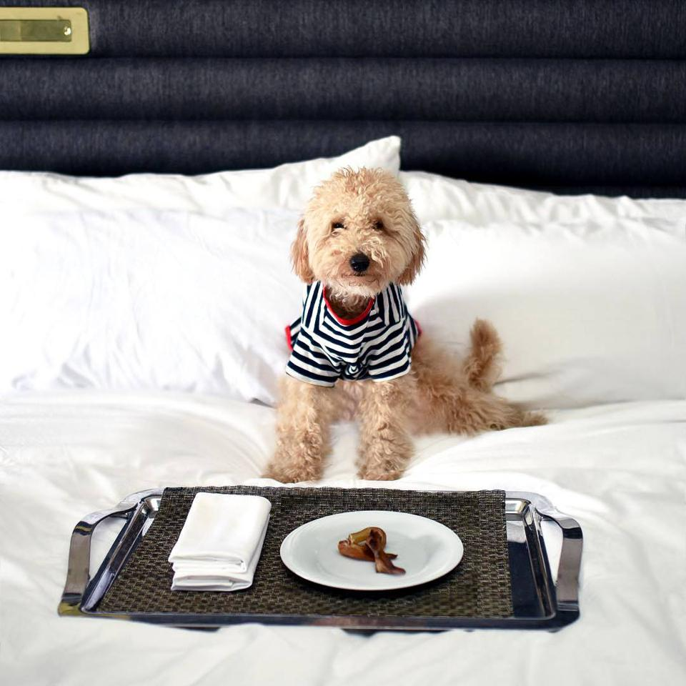 dog with room service