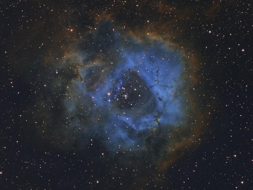 Stellar Flower © Davy van der Hoeven (Netherlands), aged 11 - WINNER
