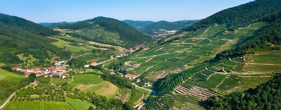 Domane Wachau Vineyards