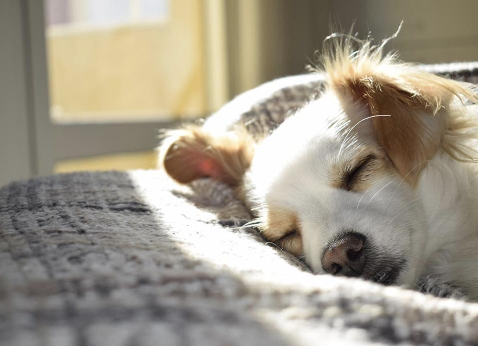 dog sleeping on bed in sunlight