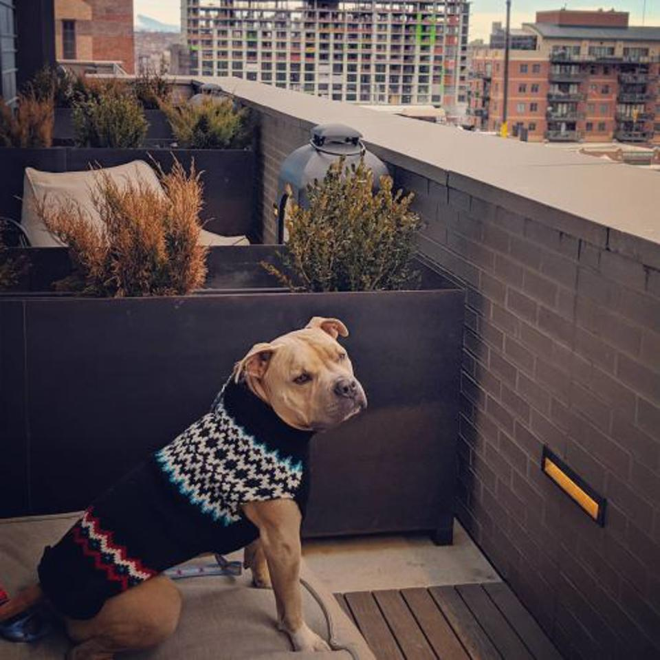 dog in sweater on balcony
