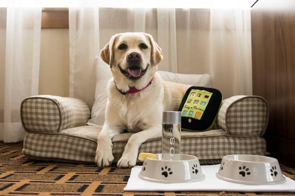 dog with amenities at hotel