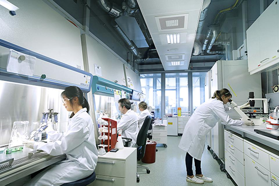 Bayer researchers examine cell cultures.