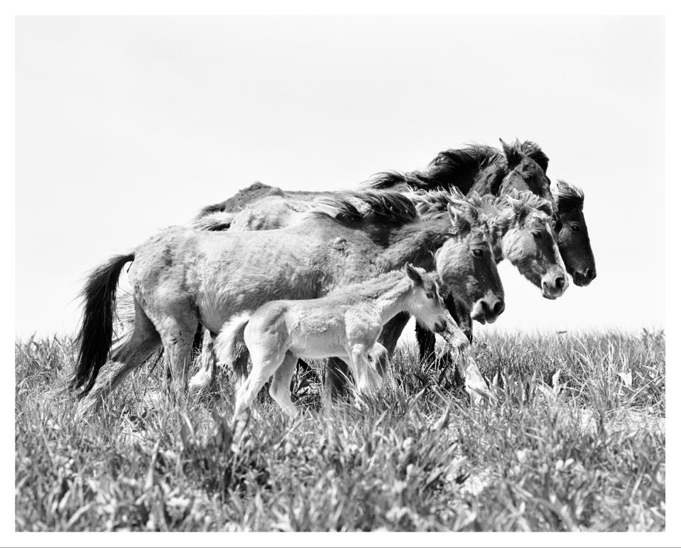 Roberto Dutesco's Majestic Images Of Wild Horses Captivate And Draw Star-Studded Crowd For Conservation