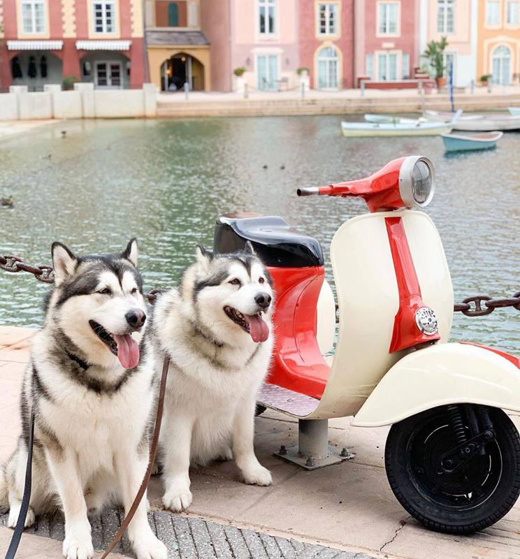 dogs with vespa