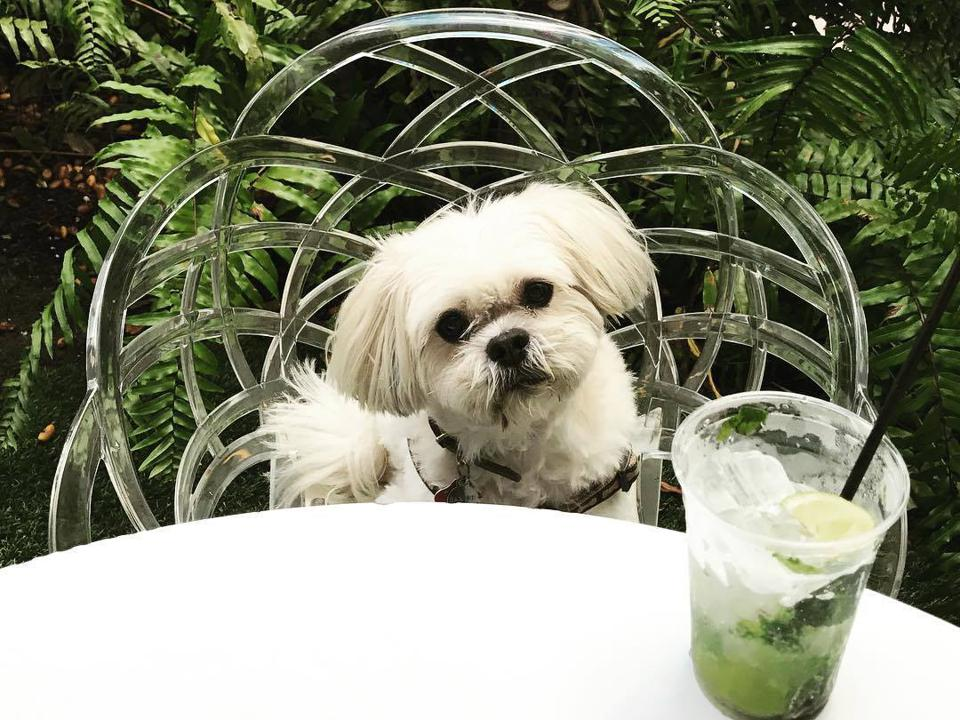 dog with green juice