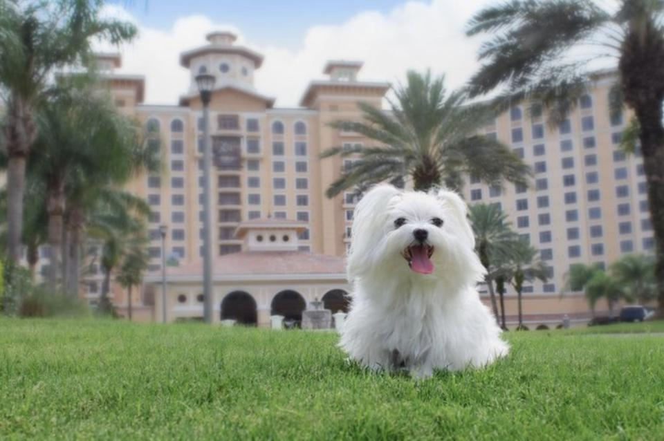 dog on lawn in front of hotel