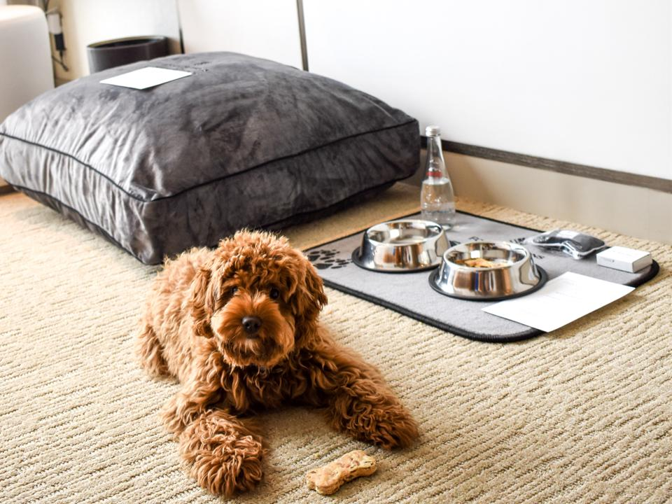 dog with pet amenities in hotel
