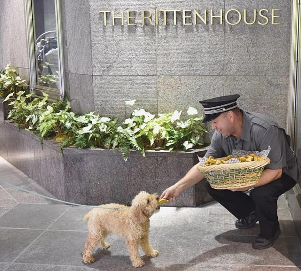 dog getting treat at hotel