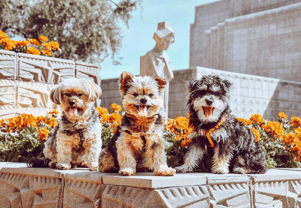 dogs with flowers and sculpture