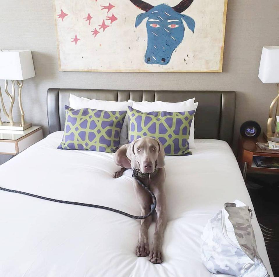 dog on hotel bed with art