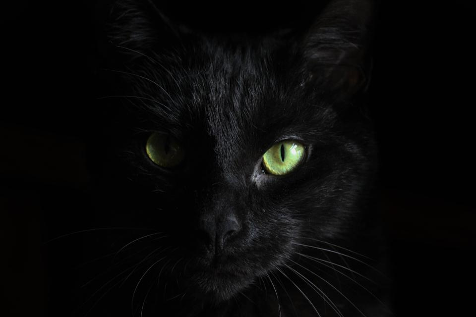 cat with night eyes