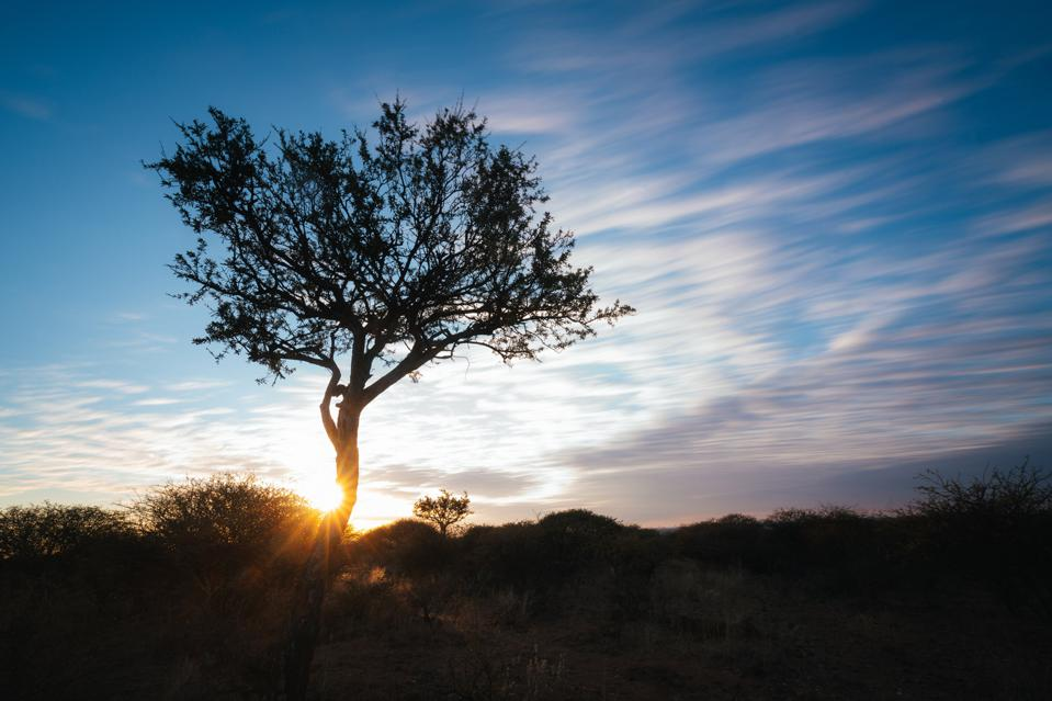 Where Conservation Meets Coddling: The Zannier Reserve in Namibia