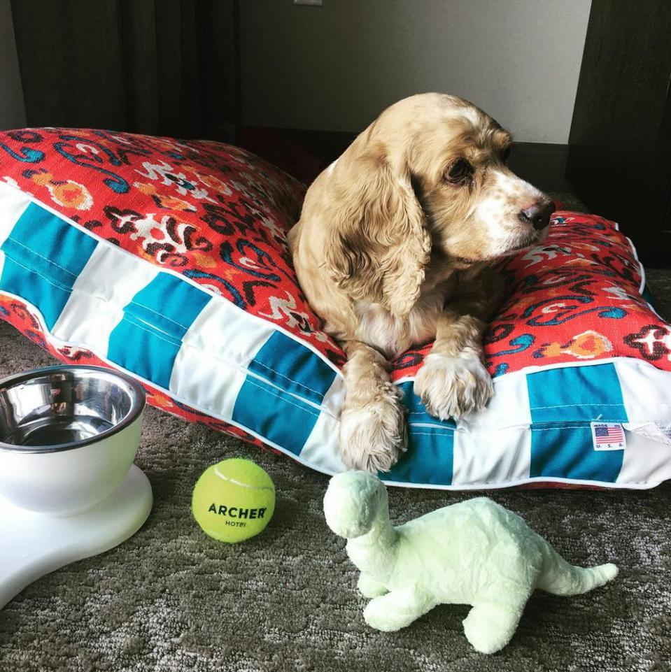 dog on pillow with toyrs