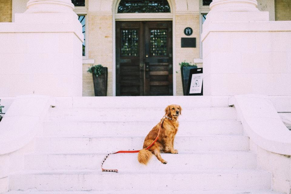 dog on white steps