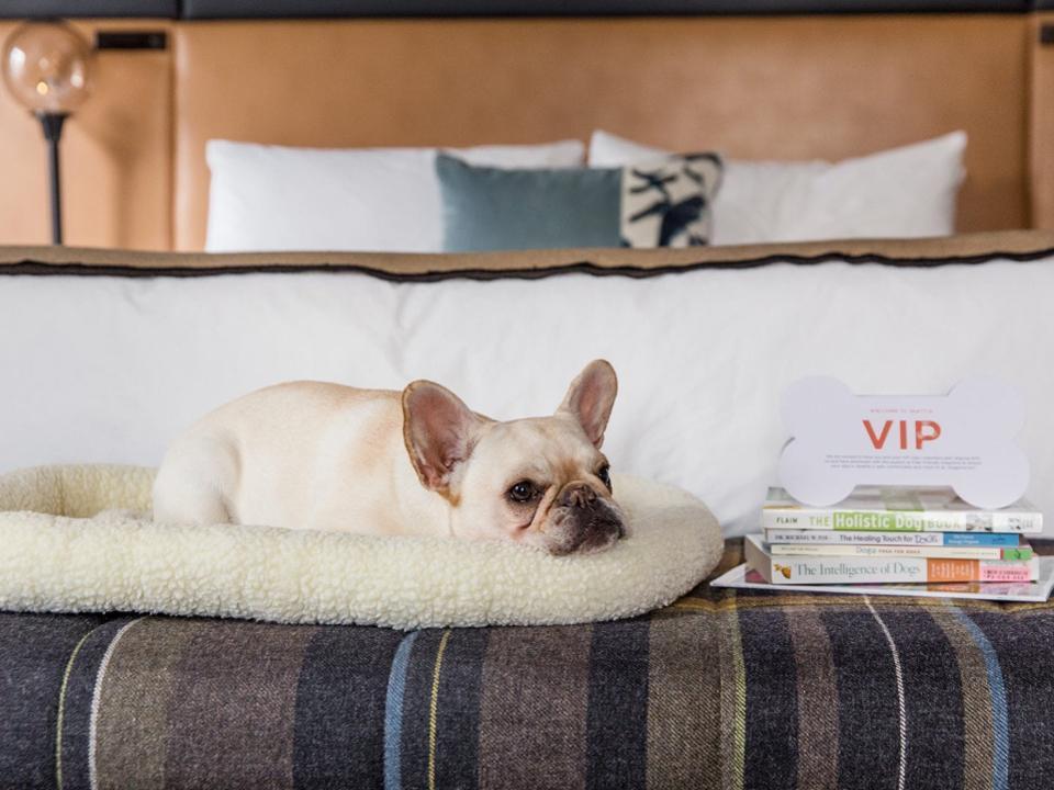 best pet hotels seattle