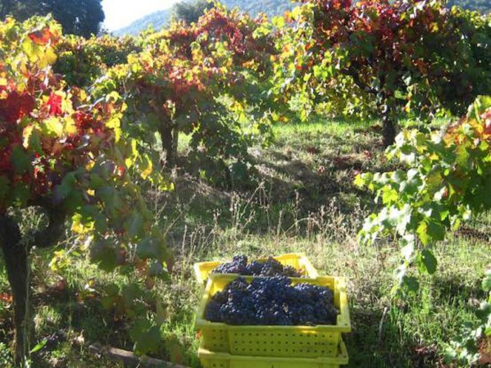 natural wine, biodynamic wine, biodiversity