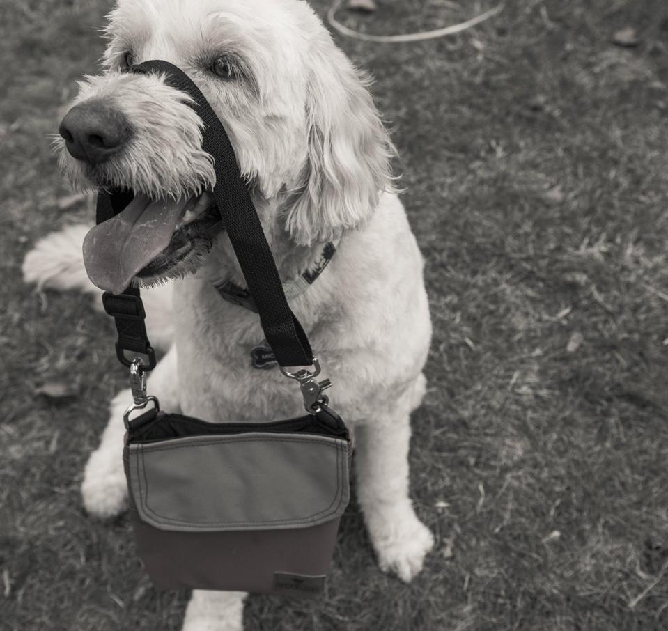 dog with bag