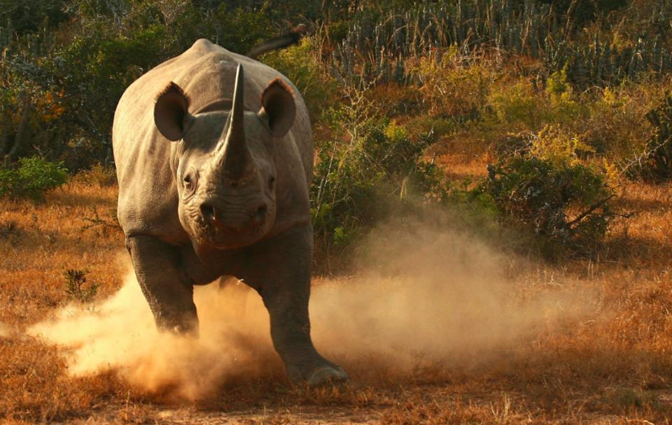 World Rhino Day: South Africa's Top Rhino Conservation Safaris