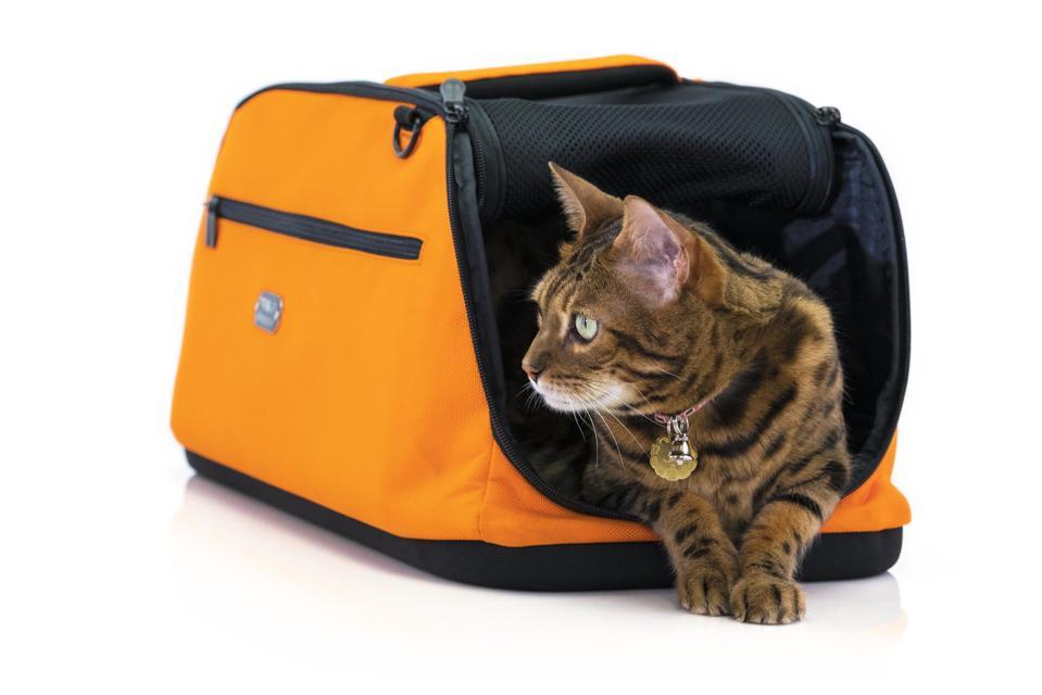 cat in orange carrier