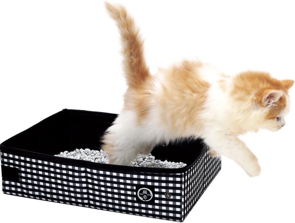 cat jumping out of littler box