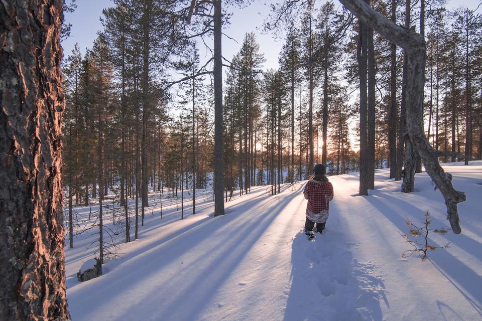 Winter Forest Ruka Kuusamo