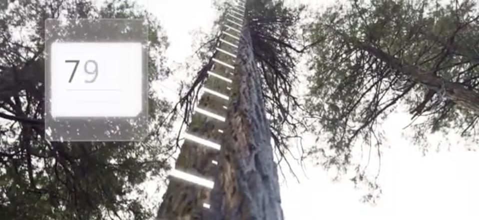SilviaTerra using AI measure trees